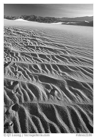 Ripples on Mesquite Sand Dunes, early morning. Death Valley National Park (black and white)