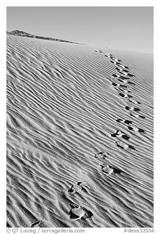 Footprints in the sand. Death Valley National Park (black and white)