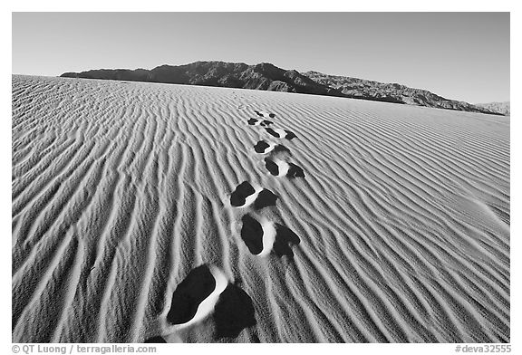 Footprints in the sand leading towards mountain. Death Valley National Park (black and white)