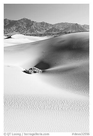 Depression in sand dunes, morning. Death Valley National Park (black and white)