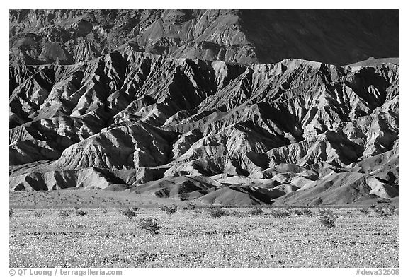 Yellow wildflowers and buttes, late afternoon. Death Valley National Park (black and white)