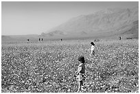 Children in a carpet of Desert Gold near Ashford Mill. Death Valley National Park ( black and white)