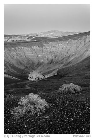 Sagebrush and Ubehebe Crater at dusk. Death Valley National Park (black and white)