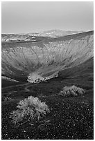 Sagebrush and Ubehebe Crater at dusk. Death Valley National Park ( black and white)