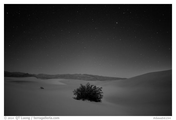 Mesquite bush in sand dunes at night. Death Valley National Park (black and white)