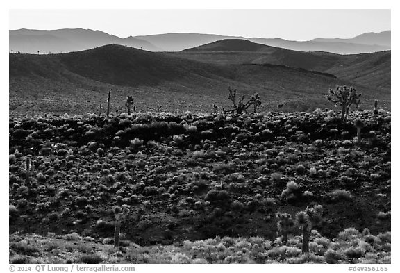 Joshua trees on ridges. Death Valley National Park (black and white)
