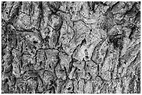 Close-up of Joshua tree bark. Death Valley National Park ( black and white)