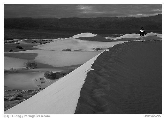 Hiker on a ridge in the Mesquite Dunes, sunrise. Death Valley National Park (black and white)