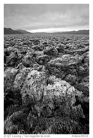 Salt formations at Devil's Golf Course. Death Valley National Park (black and white)