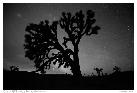Joshua Trees and stars at night, Lee Flat. Death Valley National Park (black and white)