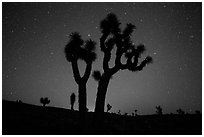 Joshua Trees and starry sky, Lee Flat. Death Valley National Park ( black and white)