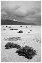 Shrubs growing on Salt Pan. Death Valley National Park ( black and white)