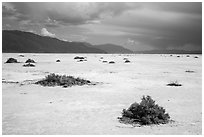 Shrubs on Salt Pan. Death Valley National Park ( black and white)