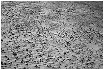 Ground covered with small sharp rock. Death Valley National Park ( black and white)