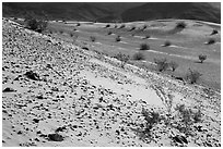 Rocks and shrubs, Ibex Dunes. Death Valley National Park ( black and white)