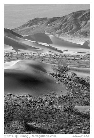 Shrubs, sand, and mountains, Ibex Dunes. Death Valley National Park (black and white)