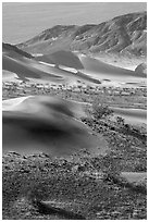 Shrubs, sand, and mountains, Ibex Dunes. Death Valley National Park ( black and white)