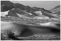 Shrubs, Ibex sand dunes, and mountains. Death Valley National Park ( black and white)