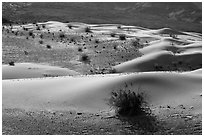 Undulating sand dunes, shrubs, and rocks, Ibex Dunes. Death Valley National Park ( black and white)