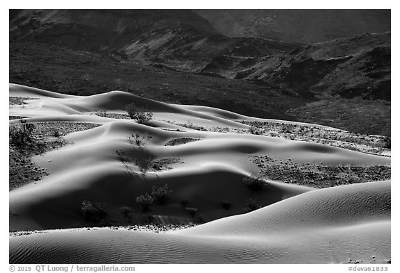 Undulating Ibex dune field. Death Valley National Park (black and white)