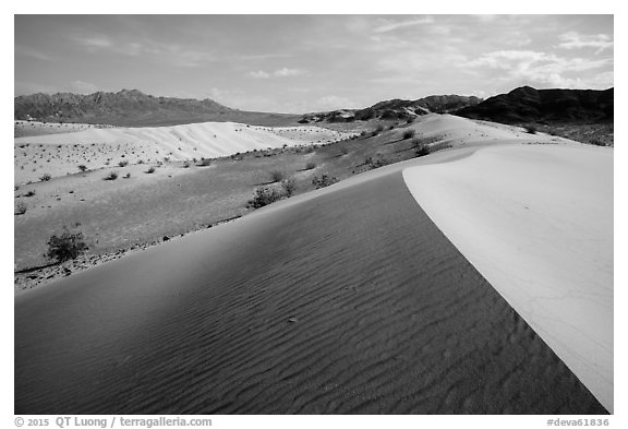 Ibex Dunes and Ibex Hills. Death Valley National Park (black and white)
