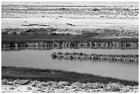 Saragota Spring ponds and salt pan. Death Valley National Park ( black and white)