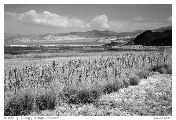 Marsh area, Saragota Spring. Death Valley National Park (black and white)