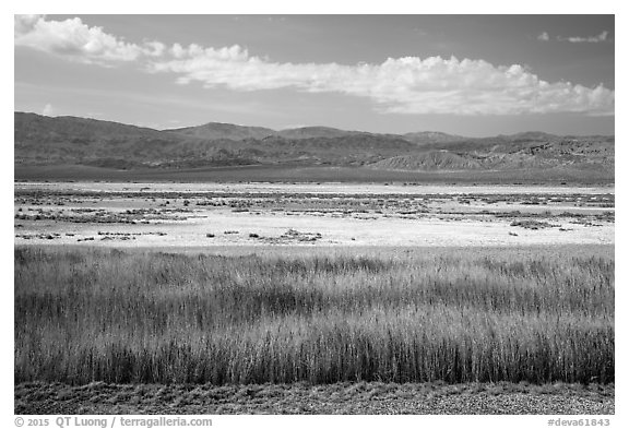 Salt Pan and riparian area, Saragota Springs. Death Valley National Park (black and white)
