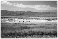 Salt Pan and riparian area, Saragota Springs. Death Valley National Park ( black and white)