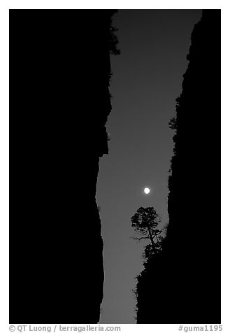 Tree and moon at night through the narrow canyon of Devil's Hall. Guadalupe Mountains National Park, Texas, USA.