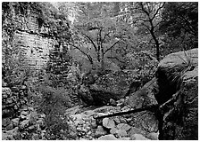 Limestone cliffs and trees in autumn color near Devil's Hall. Guadalupe Mountains National Park, Texas, USA. (black and white)