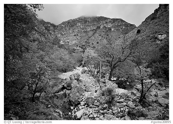Pine Spring Canyon in fall. Guadalupe Mountains National Park (black and white)