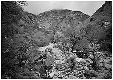 Pine Spring Canyon in the fall. Guadalupe Mountains National Park ( black and white)