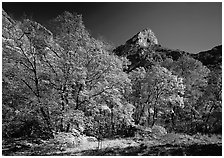 Autumn colors and cliffs in McKittrick Canyon. Guadalupe Mountains National Park ( black and white)