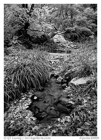 Stream in fall, Smith Springs. Guadalupe Mountains National Park (black and white)