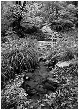 Stream in fall, Smith Springs. Guadalupe Mountains National Park ( black and white)