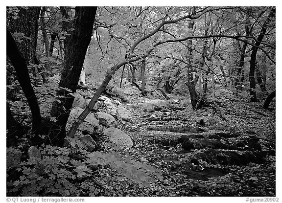 Creek and fall colors, Smith Springs. Guadalupe Mountains National Park (black and white)