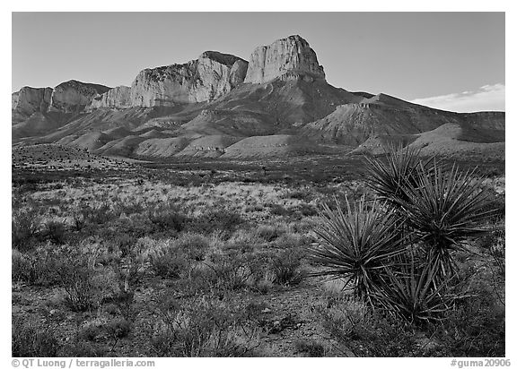 El capitan from Williams Ranch road, sunset. Guadalupe Mountains National Park (black and white)
