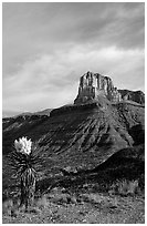 Yucca and El Capitan. Guadalupe Mountains National Park, Texas, USA. (black and white)