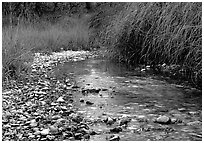 The only year-long stream in the park, McKittrick Canyon. Guadalupe Mountains National Park ( black and white)