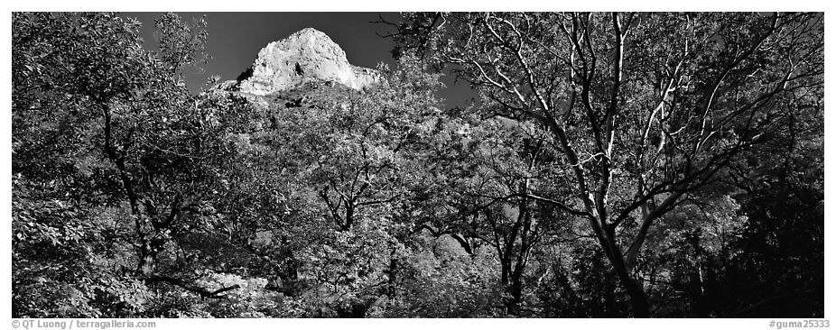 Forest in autumn color and rocky peak. Guadalupe Mountains National Park (black and white)