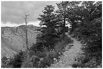 Guadalupe Peak Trail crossing higher elevation forest. Guadalupe Mountains National Park, Texas, USA. (black and white)