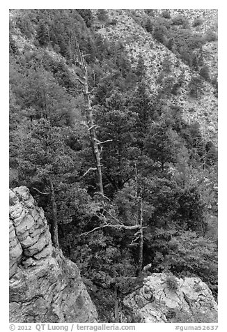 Pinnacles and conifer trees. Guadalupe Mountains National Park (black and white)