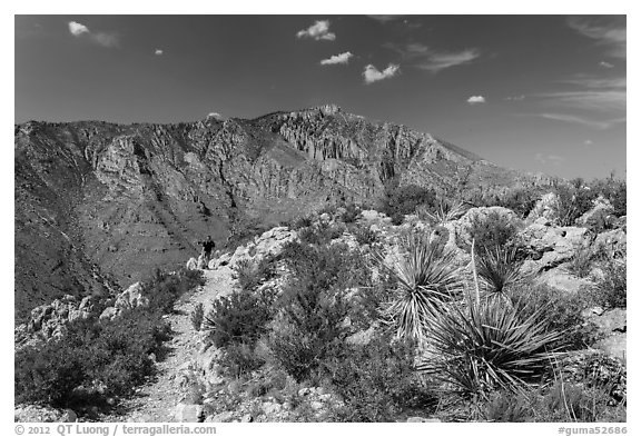 Hiker on trail above Pine Spring Canyon. Guadalupe Mountains National Park (black and white)