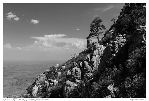 Slopes with trees and rocks high above plain. Guadalupe Mountains National Park (black and white)