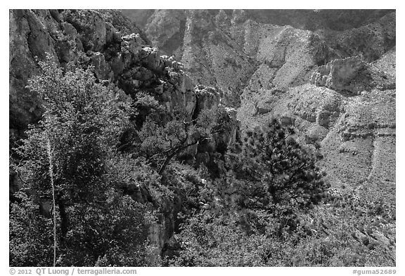 Trees and limestone cliffs. Guadalupe Mountains National Park (black and white)
