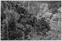 Trees and limestone cliffs. Guadalupe Mountains National Park ( black and white)