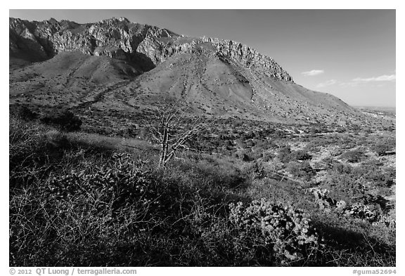 Cactus and mountains. Guadalupe Mountains National Park (black and white)
