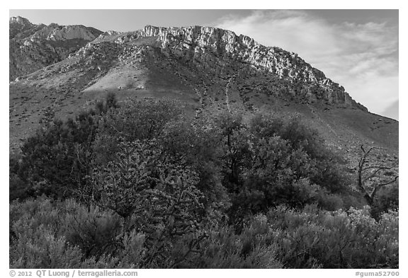 Cactus, trees, and Hunter Peak. Guadalupe Mountains National Park (black and white)