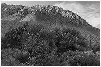Cactus, trees, and Hunter Peak. Guadalupe Mountains National Park ( black and white)